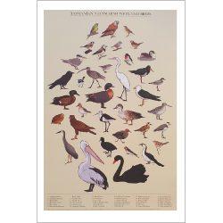 Tasmanian Saltmarsh Wetland Birds Print