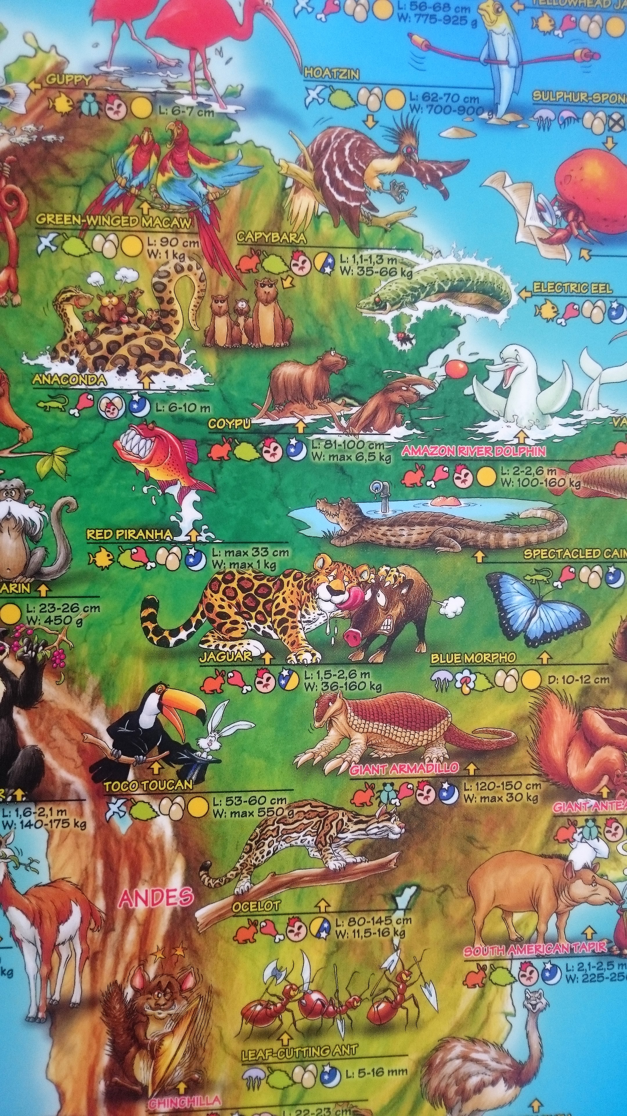 Children S Animals Of The World Map The Tasmanian Map Centre
