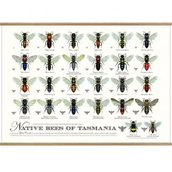 Native Bees of Tasmania Print w Hangers
